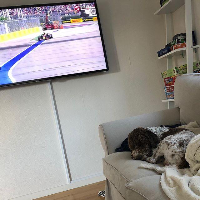 Life really sucks when the @scuderiaferrari boys don't win their races! Another sad day for us Italians. 😢 #maclagotto #lagottoromagnolo #lagotto #dogs #lagottos #lagottosofinstagram #lagottopuppy #lagottolove #lagottostyle #lagottodogs #lagottoromagnolos #dpotd  #lagottoboy #svärdsjö #dalarna #sweden #dog #dogmodel #dogmodels #dogsofinstagram #dogsofinsta  #doglovers #daddysdog #dogstagram #pappajagvillhaenitalienare @knappare @liminglindblad @k.rowntree @taxen_coco #seb5 #kimi7
