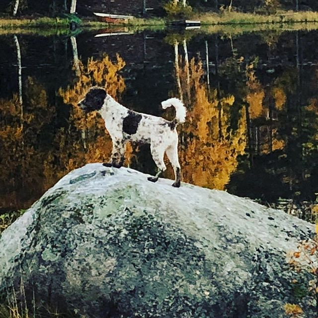 Like beautiful painting I am!#dogpainting #autumnisamazing #lagottoromagnolo #lagotto #dogsofinstagram #pappajagvillhaenitalienare @liminglindblad @kristerlindholmfalun